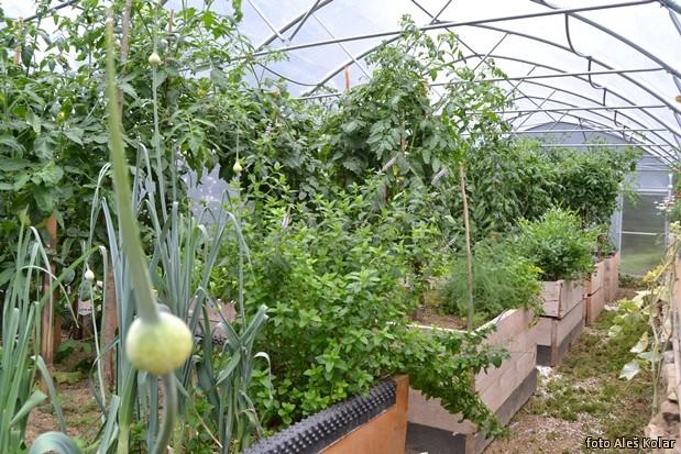 visokogredno vrtnarjenje na treh kraljih DSC 0547